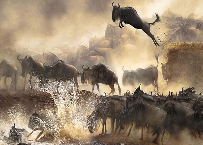 Необъяснимо, но факт: миграция животных.