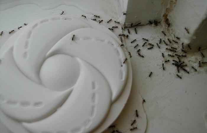 Жизненный совет: корица против муравьев.