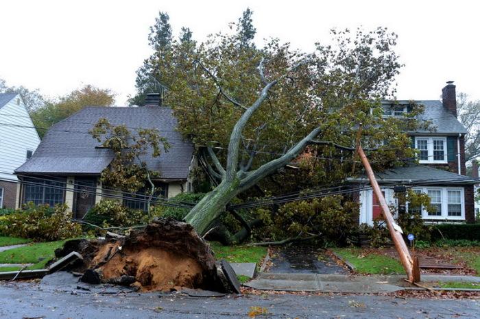 Деревья опасны для построек. |Фото: news.day.az.