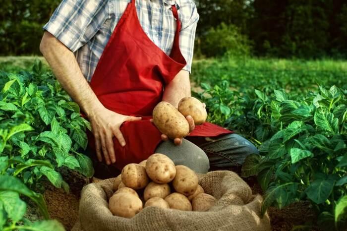Картошку можно сажать.  Фото: dengodel.com.