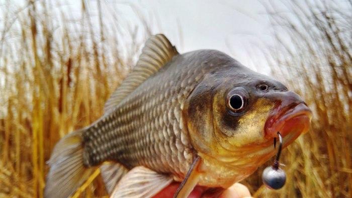 Успешной рыбалки. ¦Фото: yandex.com.