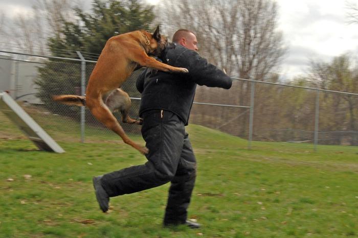 Не беги - дерись. |Фото: pxhere.com.