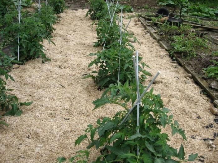 Защищаем и удобряем почву. |Фото: sveklon.ru.