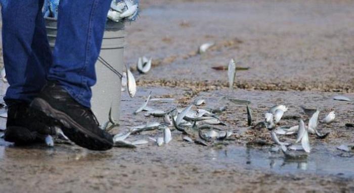 Дожди из рыбы и лягушек не редкость.