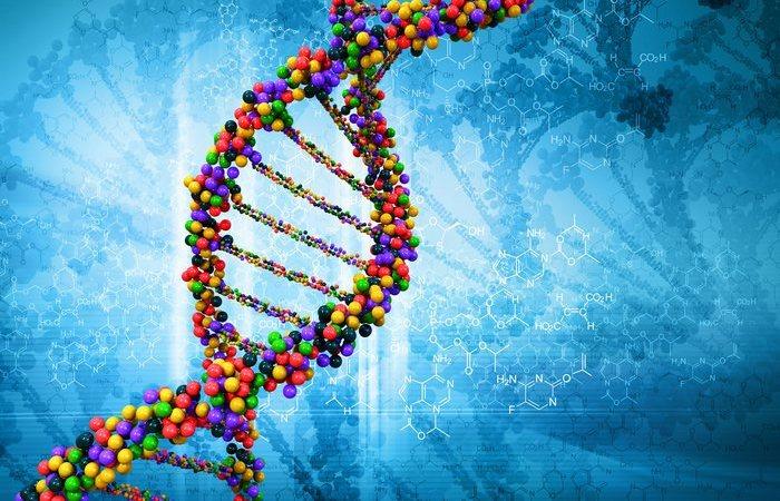 Предпочтения заложены генетически.