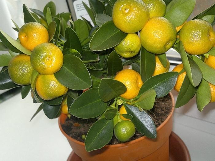 Важно, чтобы мандарин был спелым. ¦Фото: россельхоз.рф.