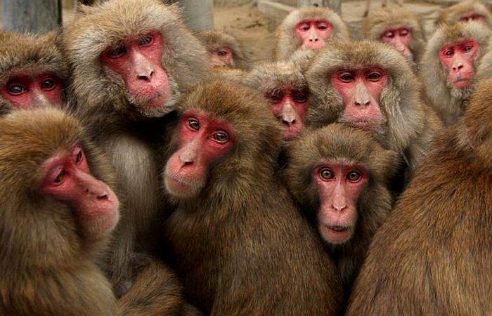 Смешная единица измерения: обезьяноминута.