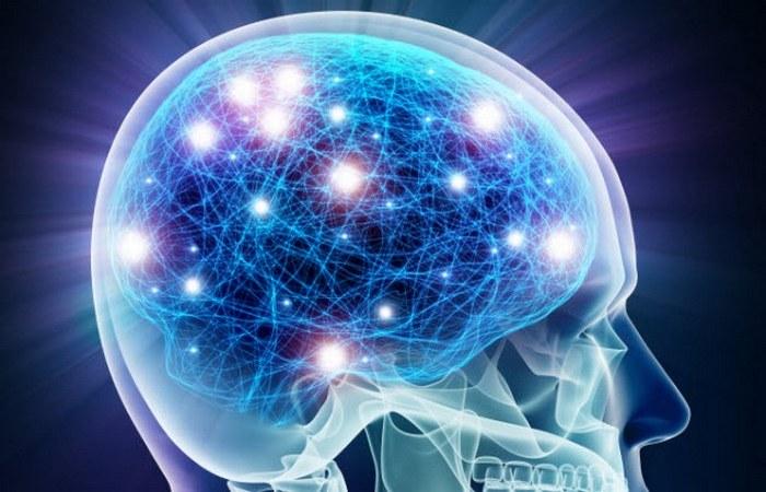 Стало проще изучать мозговую ткань.