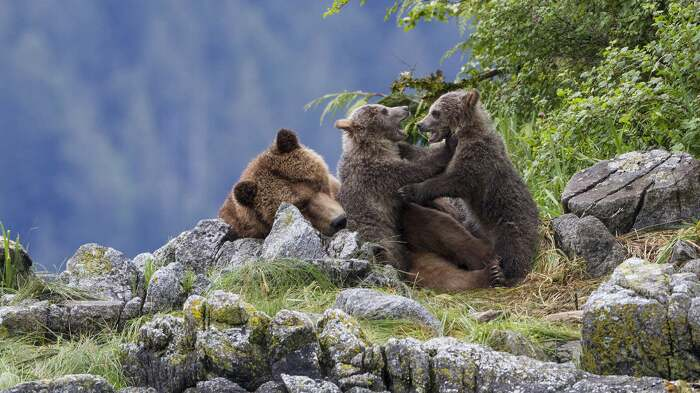 Медведь - уникальное существо. |Фото: kino-db.com.
