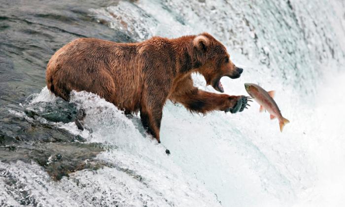 Но едят они не только мед. |Фото: imgfon.ru.