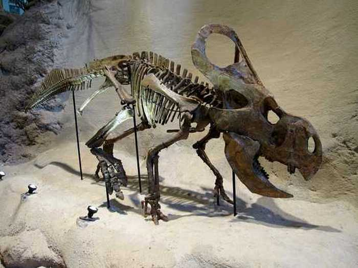 Протоцератопсы.