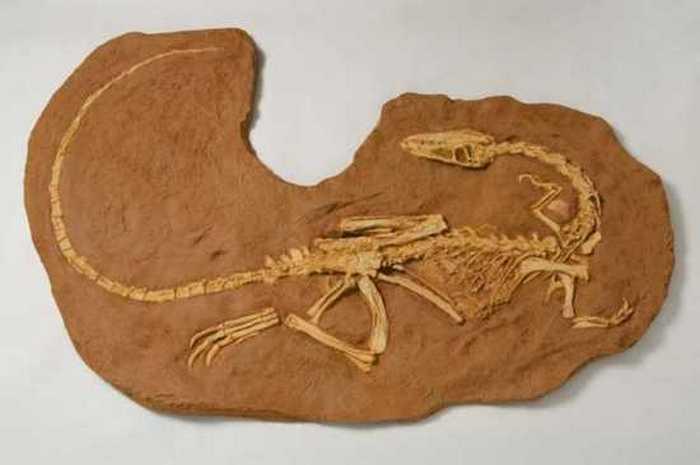 Анхизавры.