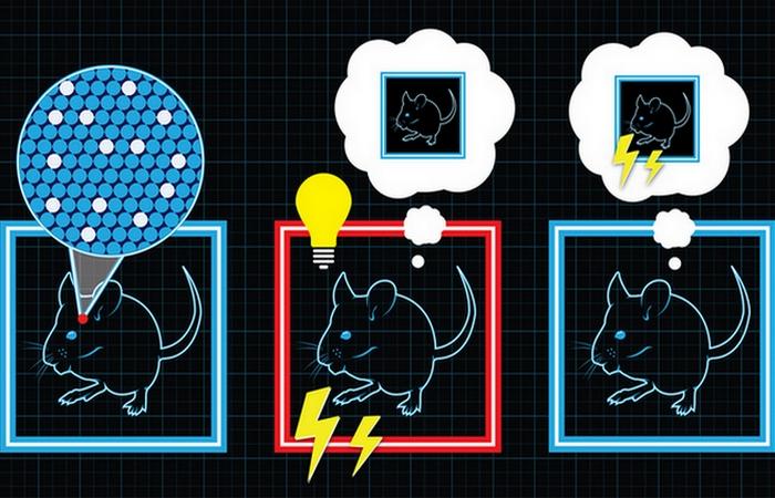 Изобретение 21 века: искусственные воспоминания.