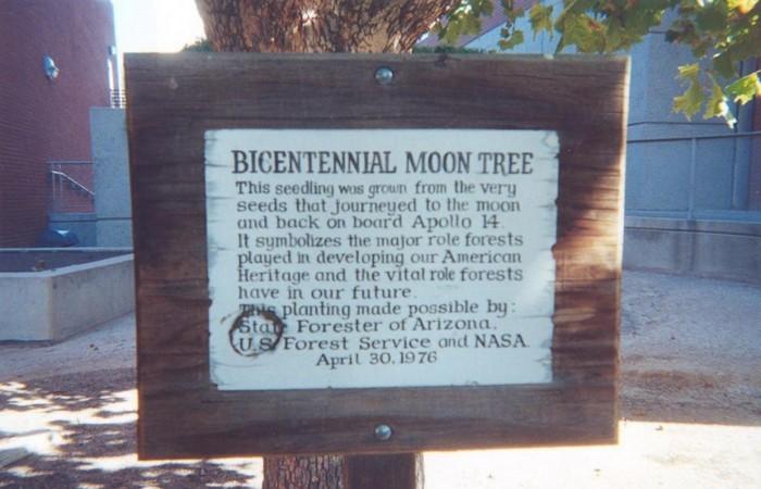 400 деревьев, растущих на Земле, были привезены с Луны.