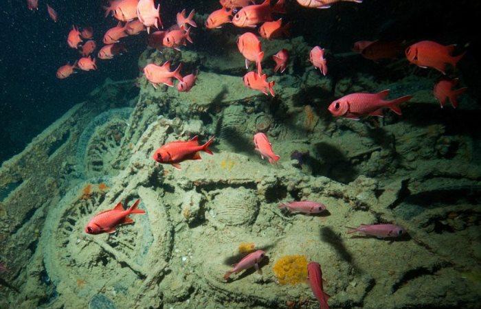 Вот, что скрывают глубины Красного моря.