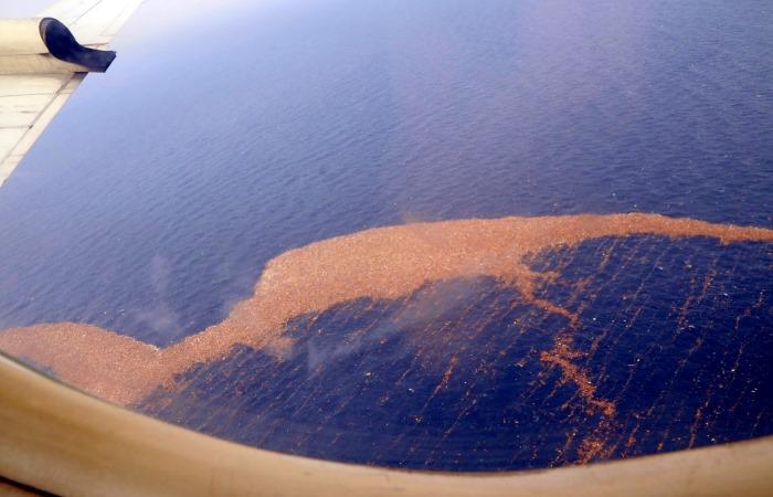 Новый континент найден в Тихом океане.