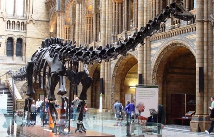 Уникальный экспонат лондонского музея естественной истории.