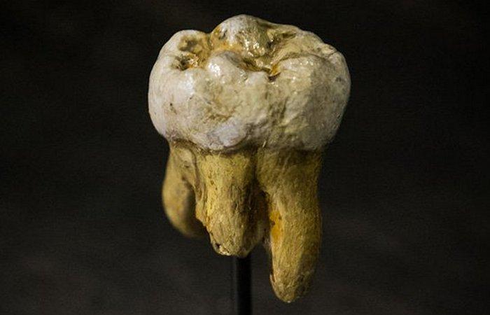 Зуб гоминида.