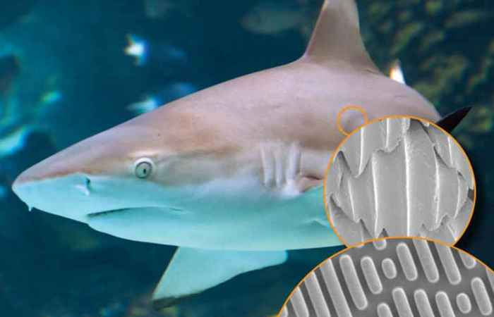 Противомикробные катетеры: акула.