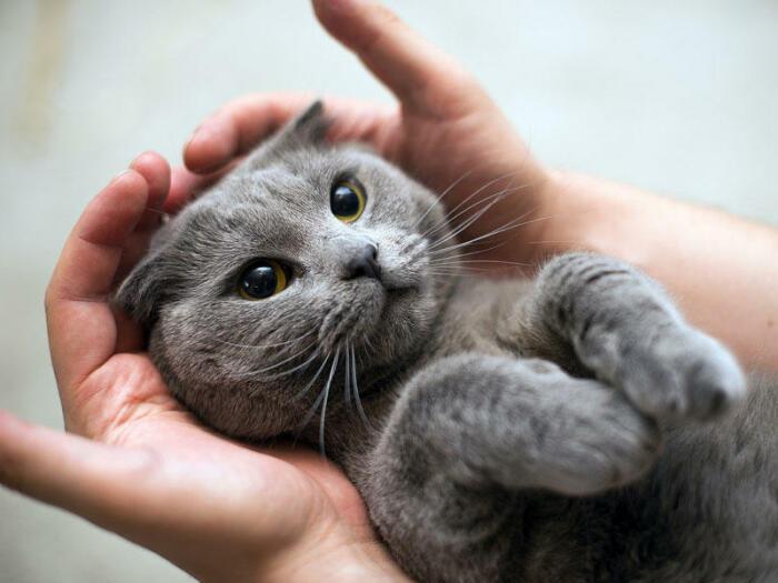 Руки не любит. |Фото: wallhere.com.
