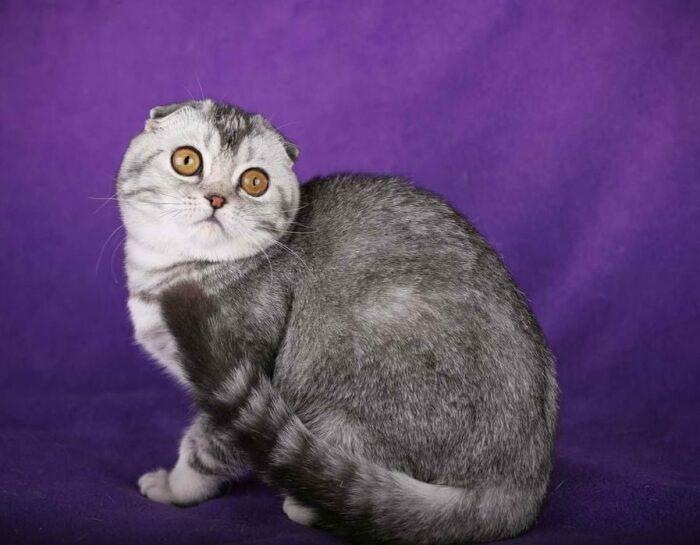 Высоты кот боится. |Фото: smallivingworld.ru.
