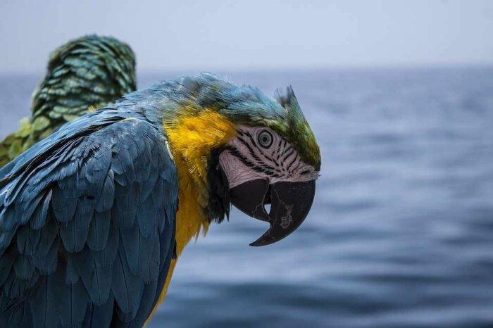 Попугаи стоили огромных денег. |Фото: freeimg.ru.