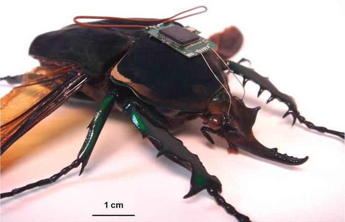 Футуристические роботы-жуки.