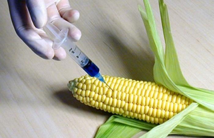 Генетически модифицированные продукты питания.