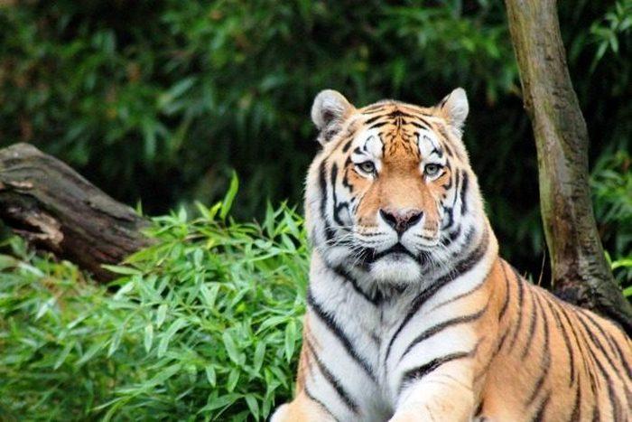 Без человека восстановятся популяции исчезающих видов животных и растений.