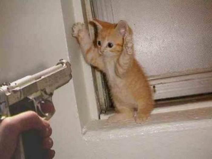 Убить или отпустить домашних животных.