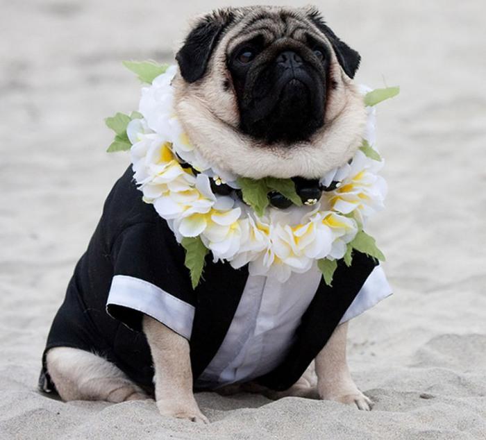 Клерк, которая угрожала выйти замуж за своего пса.
