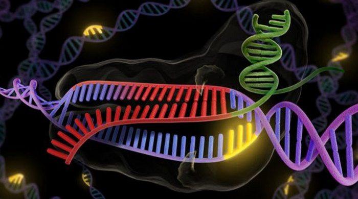 Возмутительный эксперимент: CRISPR-Cas9.