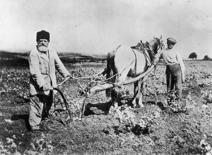 Картошка, да репа - основа рациона. |Фото: dhoz.ru.