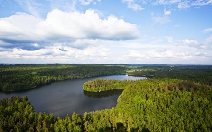 Лесов много, но они не везде. |Фото: inancialtribune.com.