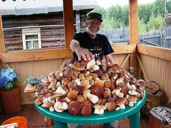 Большинство любителей грибов живет на юге страны. ¦Фото: potokmedia.ru.