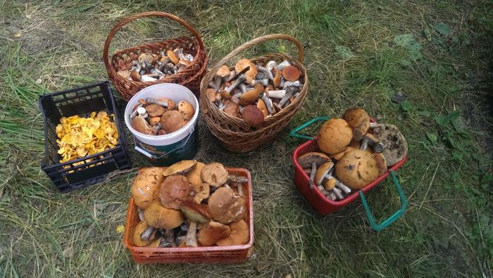 Рано утром за грибами ходят не просто так. |Фото: drive2.com.