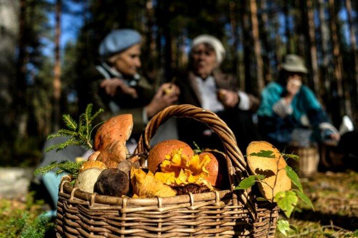 Сбор грибов дело непростое. ¦Фото: myseldon.com.