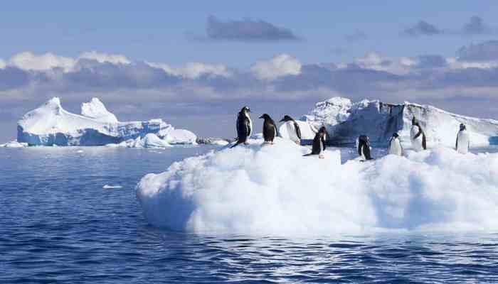 Возможно выжить в Антарктиде.