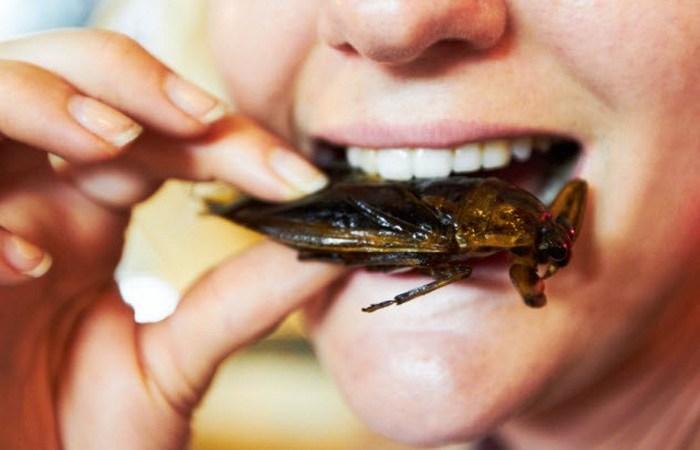 Употребление насекомых в пищу как решение проблемы голода.