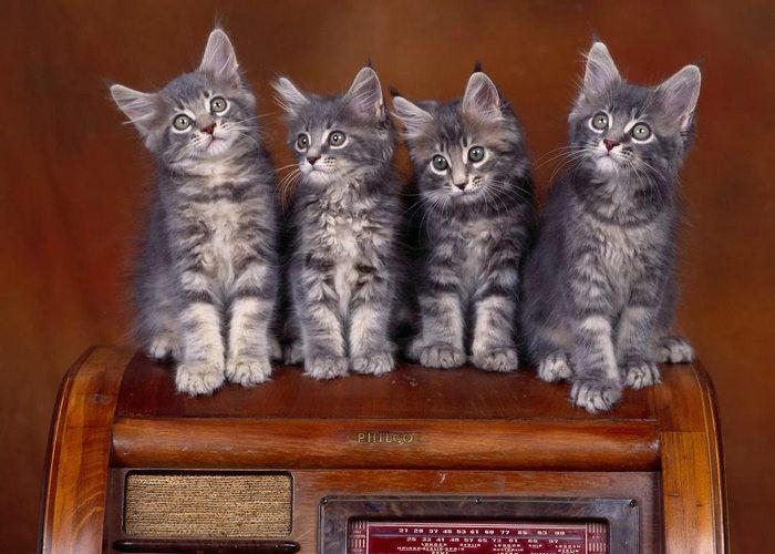 Закон штата Канзас о «четырех кошках».