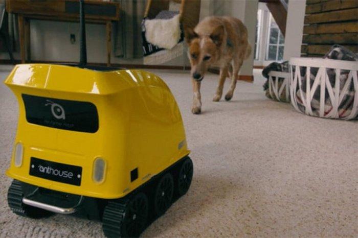 Робот, который позаботится о домашних питомцах.