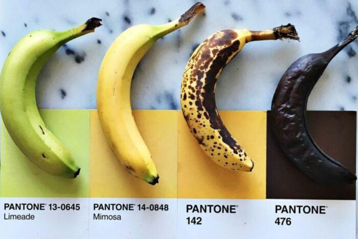 Важнейшую роль играет цвет продукта. ¦Фото: ya.ru.