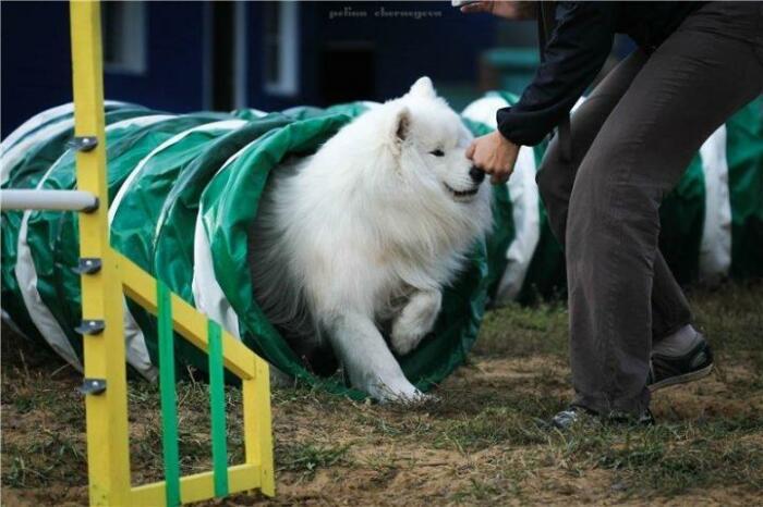 Должен работать специалист. |Фото: dogsbaikal.ru.