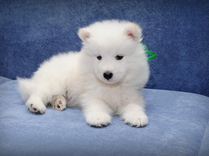 Здоровым собакам помощь не нужна. ¦Фото: zastavki.com.