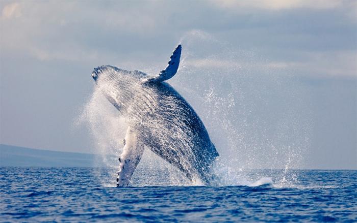 Почему некоторые млекопитающие вернулись в воду.