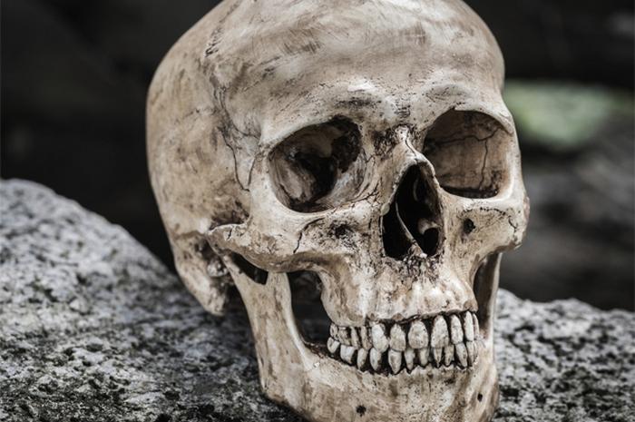 Таинственный предок человека.