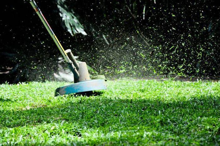 Научный факт о запахе скошенной травы.