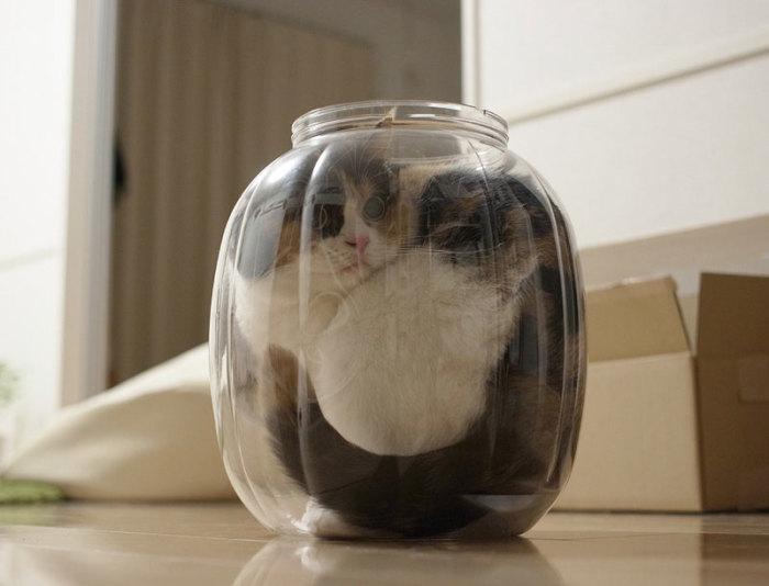 Коты - это жидкость.