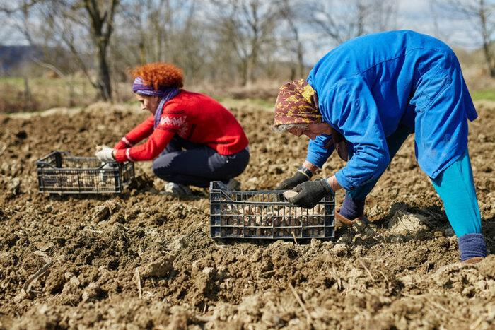 Все это не касается одиночных хозяйств. |Фото: fb.ru.