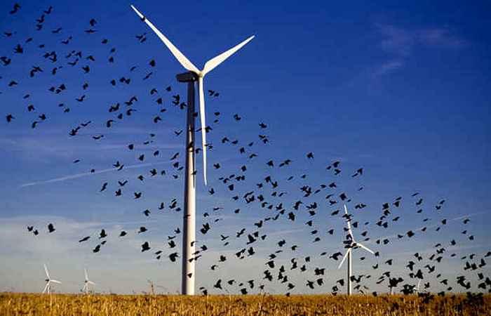 Ветряные и солнечные электростанции убивают дикую природу.